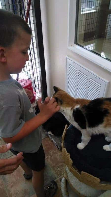 My son Kevin petting the cat.