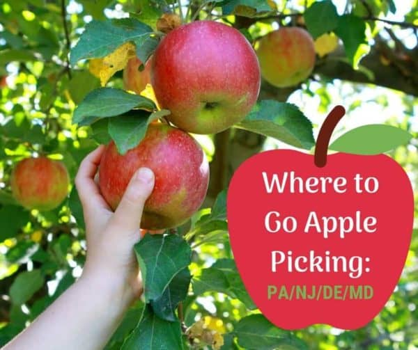 apple picking in New Jersey and PA