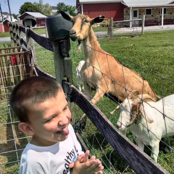 Kevin visiting with the goats at Baily's Farm.