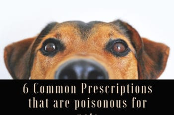 medicine poisonous for dogs