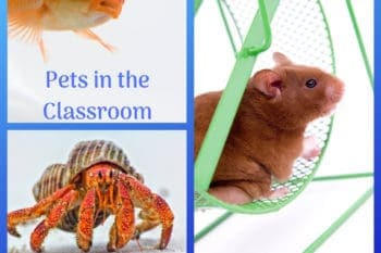 having pets in the classroom fish hermit crab hamster ideas