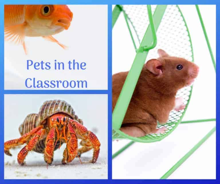 How to get a Pets in the Classroom Grant.