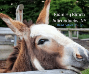 ridin hy ranch adironacks new york donkey close up of face