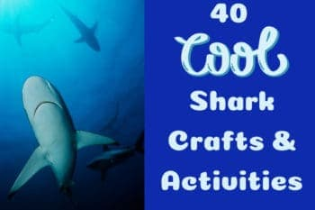 shark activities and crafts with shark swimming in ocean