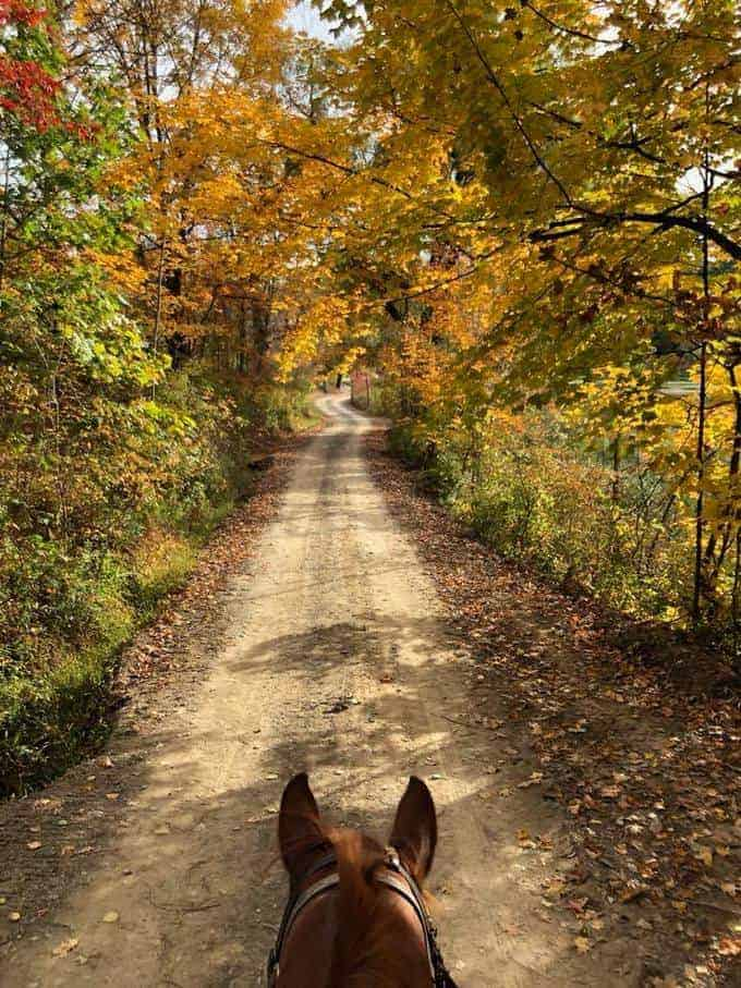 Pine Ridge Dude Ranch | Upstate NY | Why It's our Family Favorite!