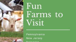 {Quack,Oink and Moo} 15 Working Family Farms to Visit.