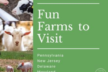 fun farms for kids to visit and see cows pigs baby goats